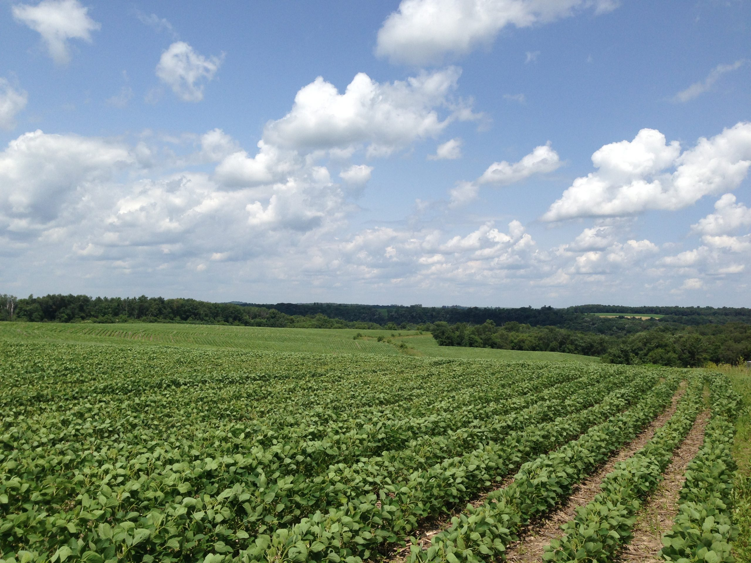 191+/- Acres Fillmore County, MN
