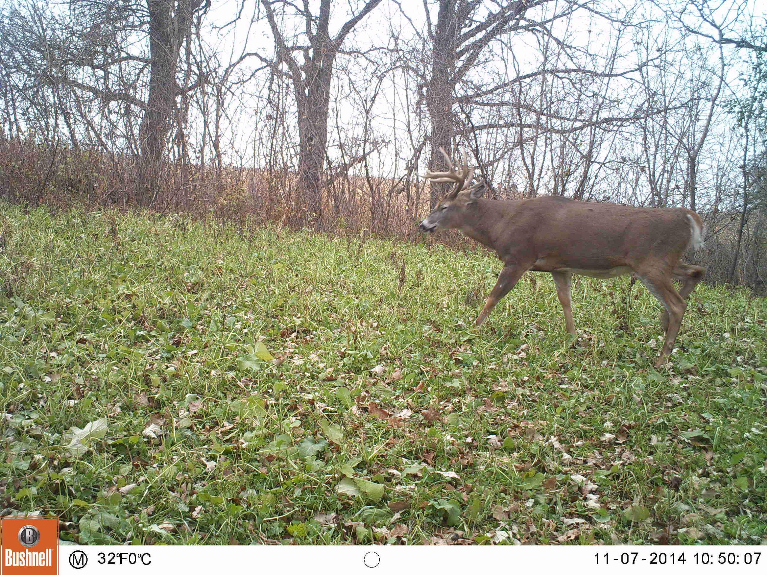 105+/- Acres Wabasha County, MN