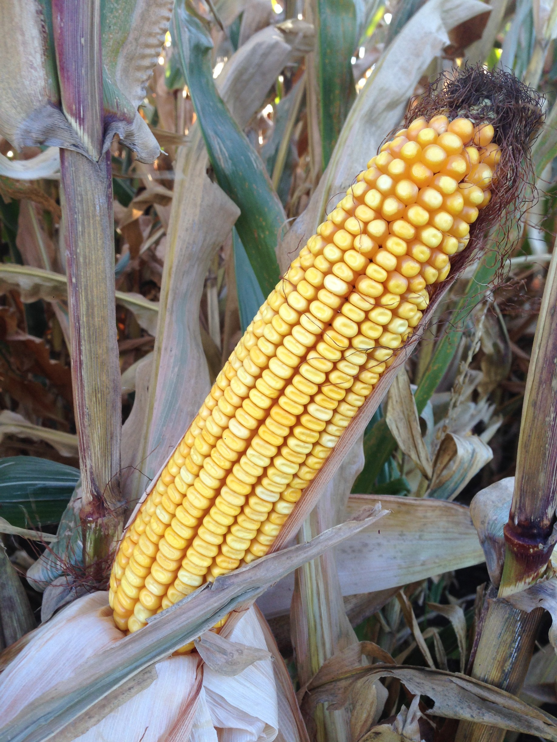 501+/- Acres Olmsted County, MN