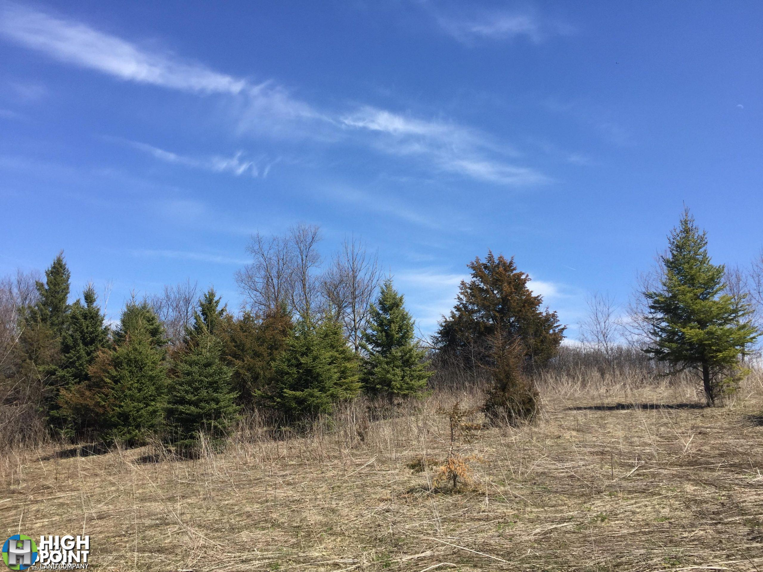 40+/- Acres Olmsted County, MN