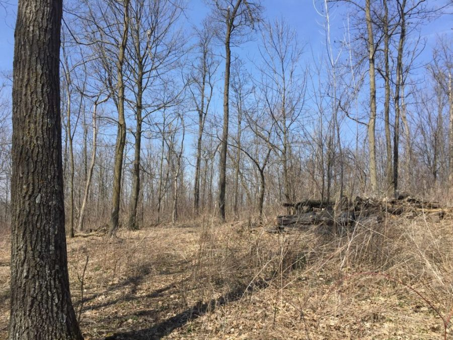 20+/- Acres Fillmore County, MN
