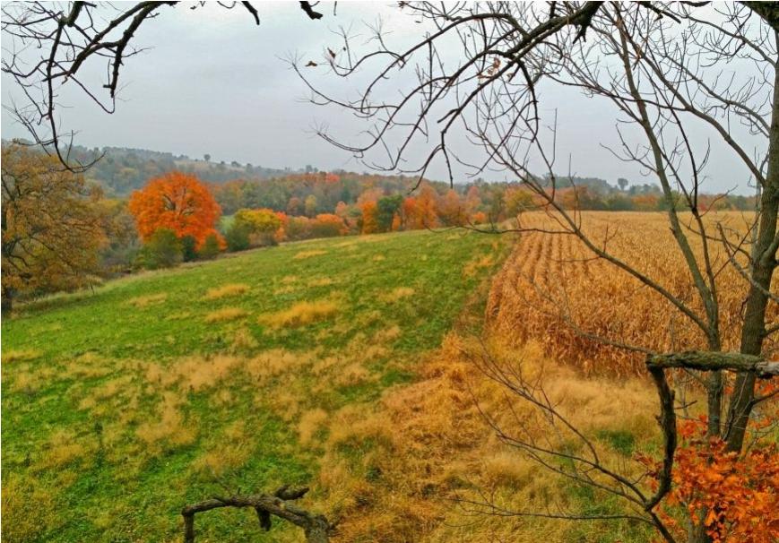 220+/- Acres Allamakee County, IA