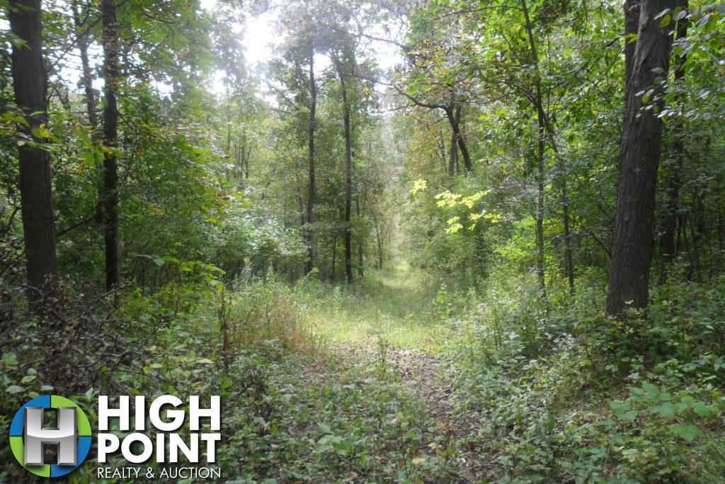 Woods-Path-1024x683