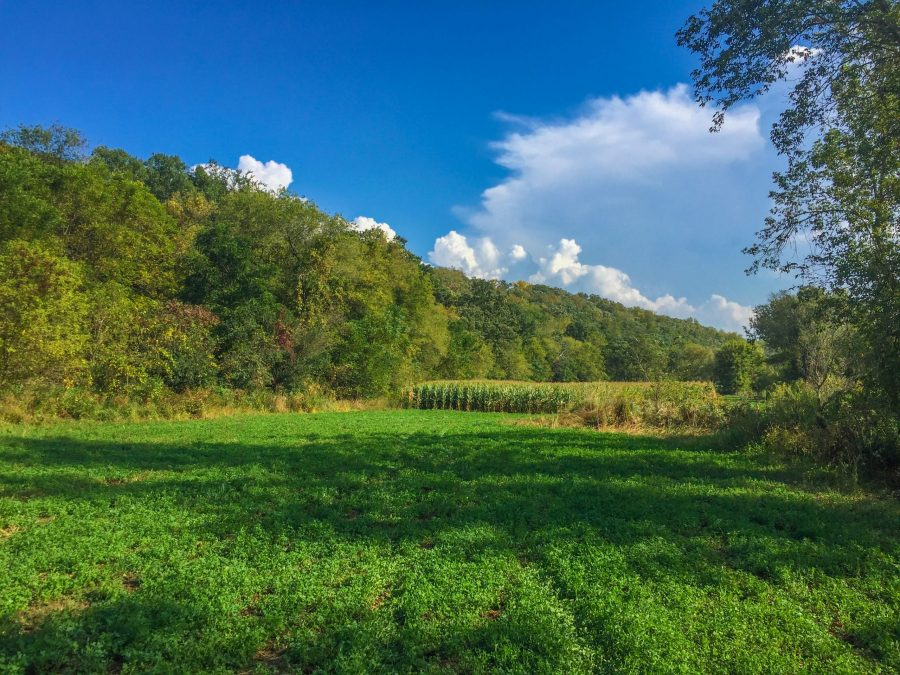 33+/- Acres Fillmore County, MN