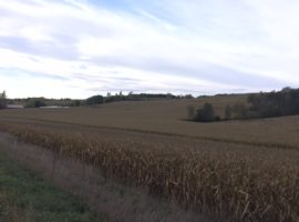 65 +/- Acres Olmsted County, MN