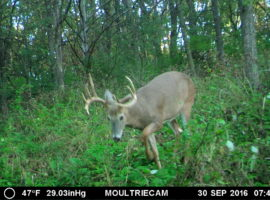 96+/- Acres Fillmore County, MN