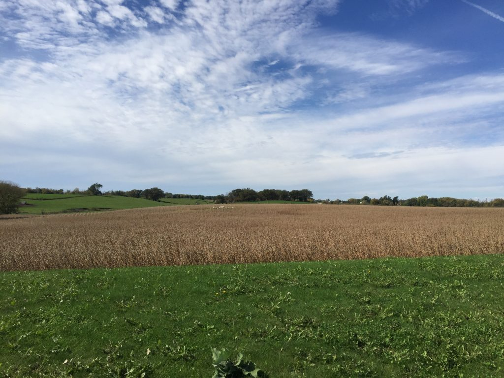 17.5 +/- Acres Olmsted County, MN