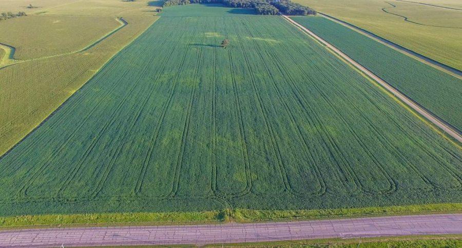 202+/- Acres Mower County, MN