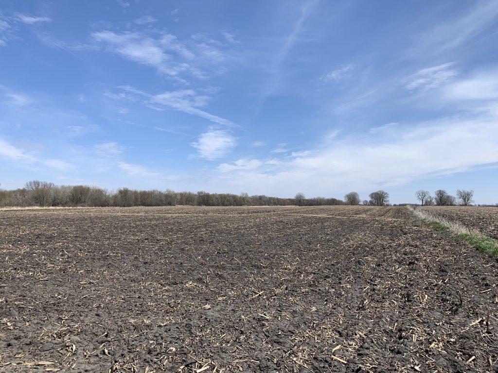 40+/- Acres Steele County, MN