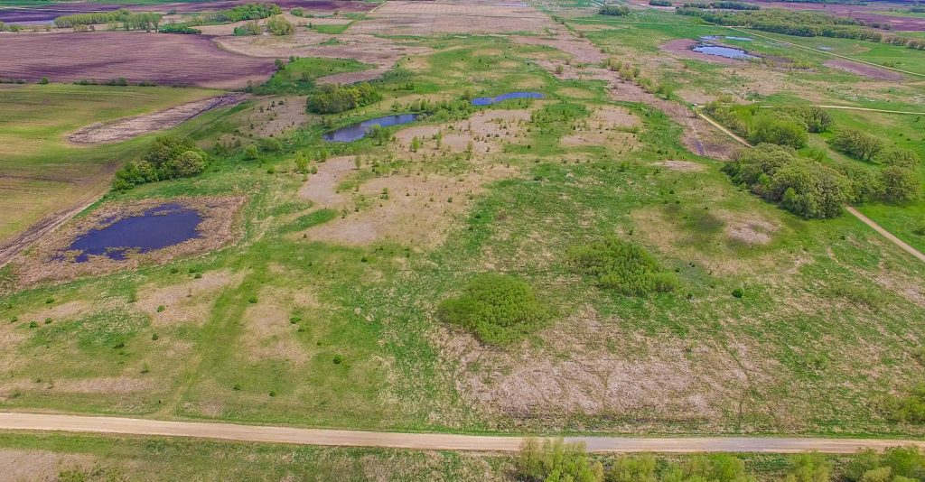 81+/- Acres Freeborn County, MN
