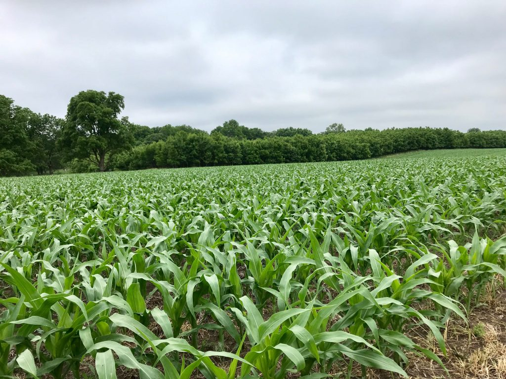 58.41 +/- Acres Mitchell County, IA