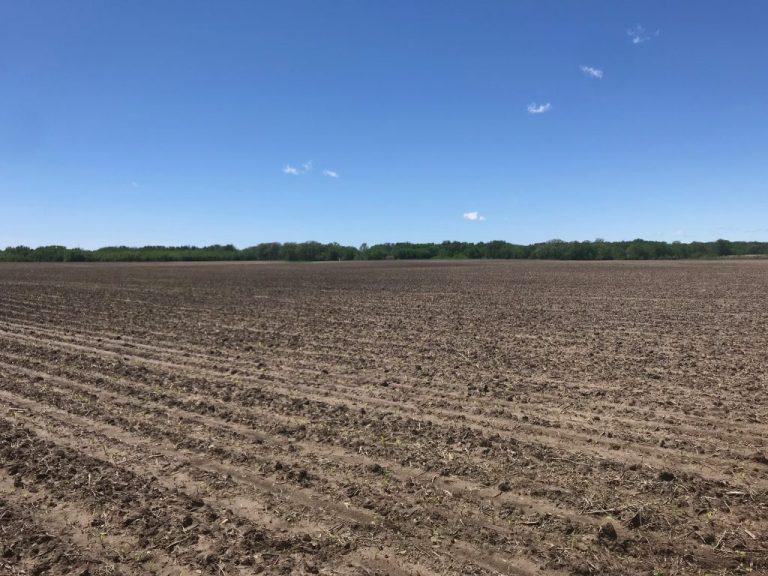 75+/- Acres Floyd County, IA