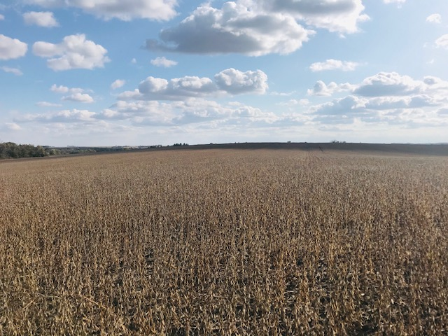 28+/- Acres Chickasaw County, IA