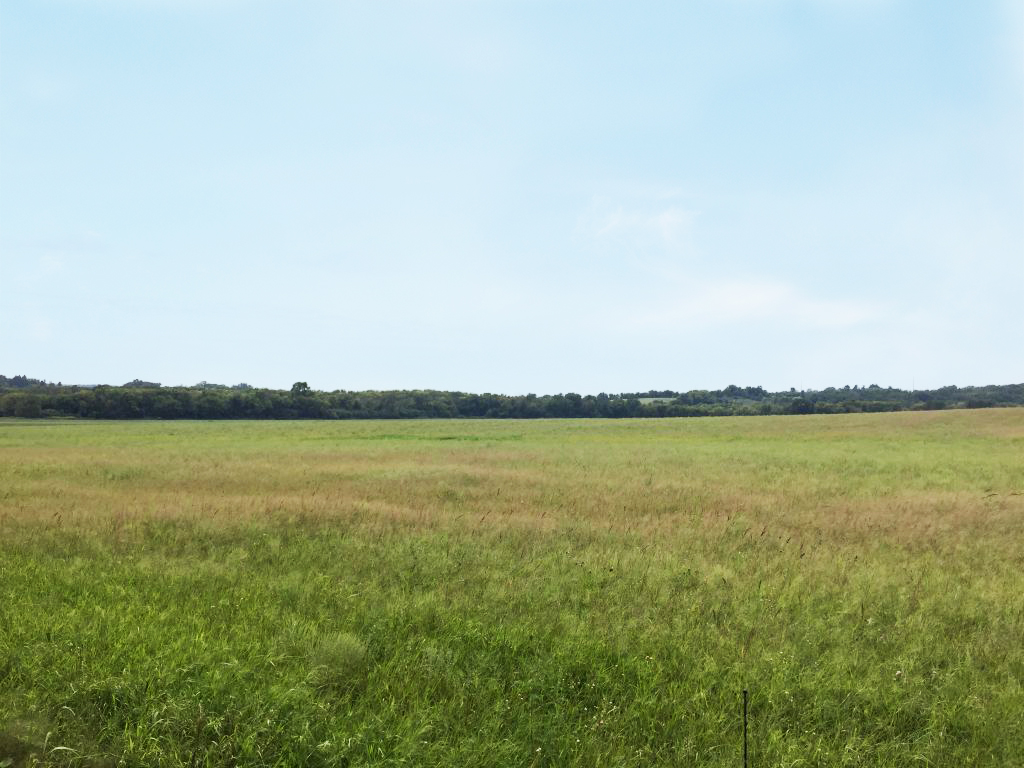20+/- Acres Olmsted County, MN