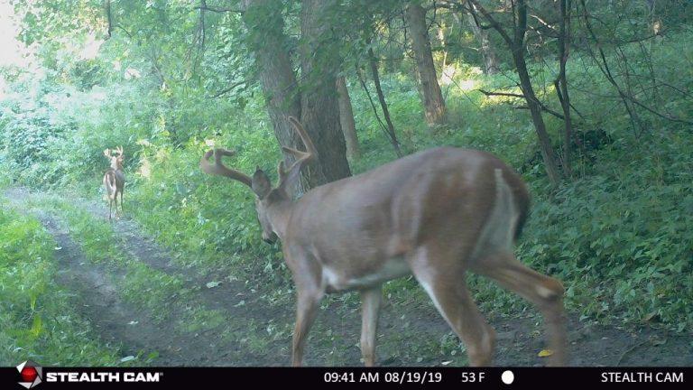 55+/- Acres Trempealeau County, WI