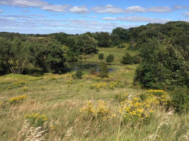 106+/- Acres Olmsted County, MN