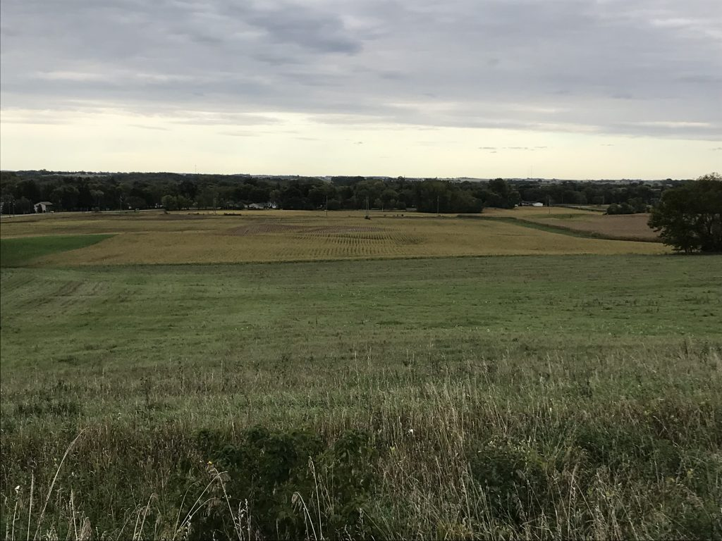 160+/- Acres Rice County, MN