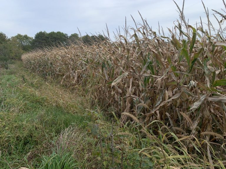18.91+/- Acres Fillmore County, MN