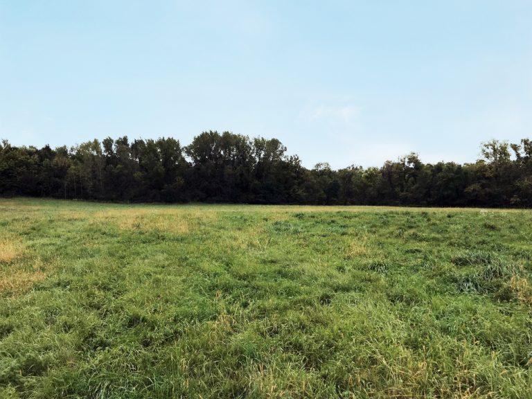 53.6+/- Acres Rice County, MN