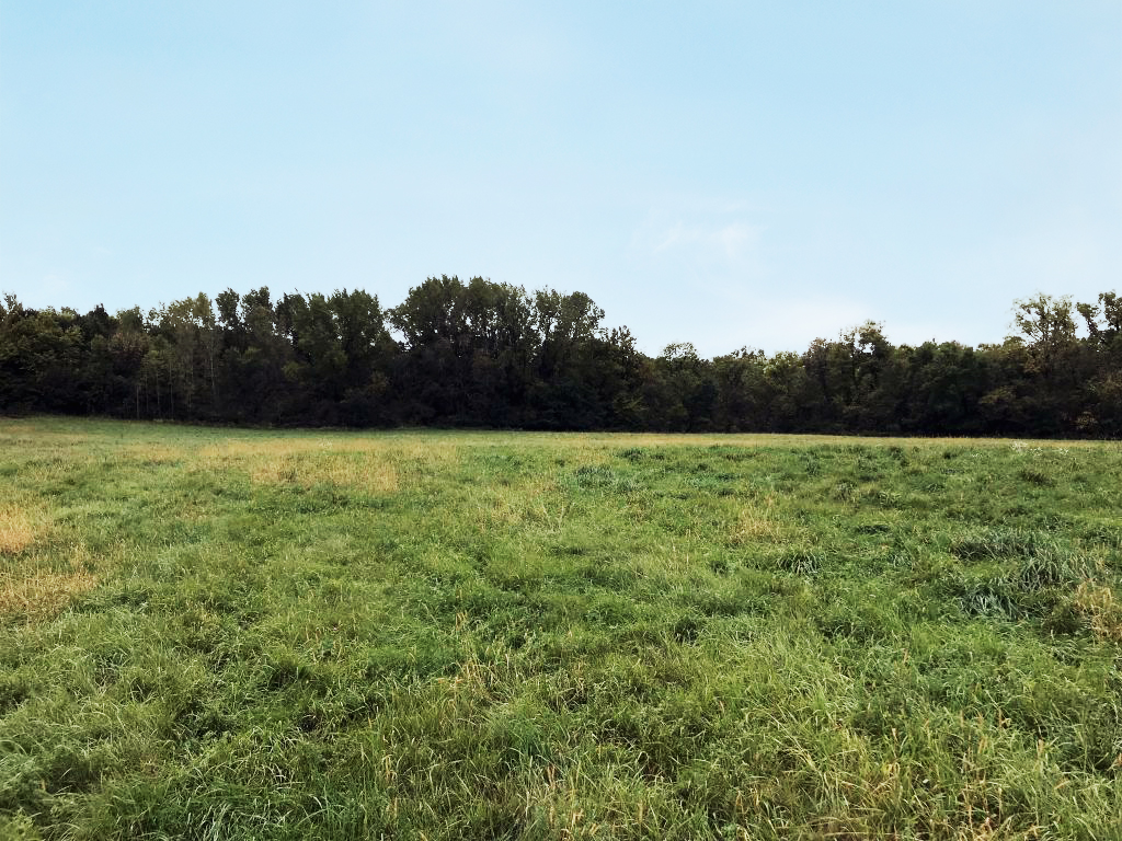 53.6+/- Acres Rice County, MN