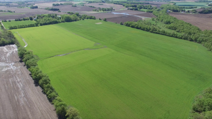 60+/- Acres Olmsted County, MN - For Lease (Sealed Bid Auction)