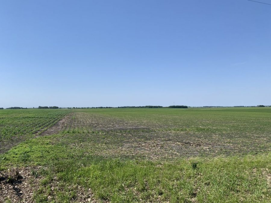 158.4+/- Acres Mower County, MN