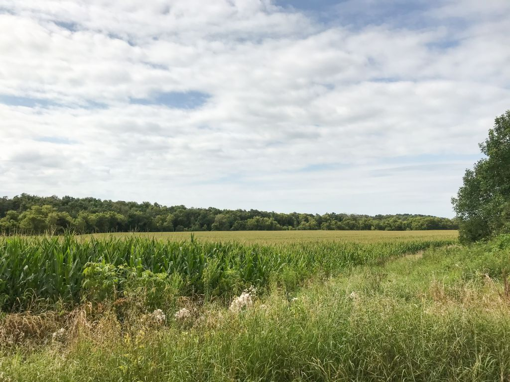 163.83+/- Acres Fillmore County, MN