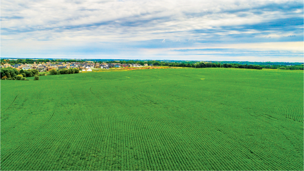 150+/- Acres Olmsted County, MN