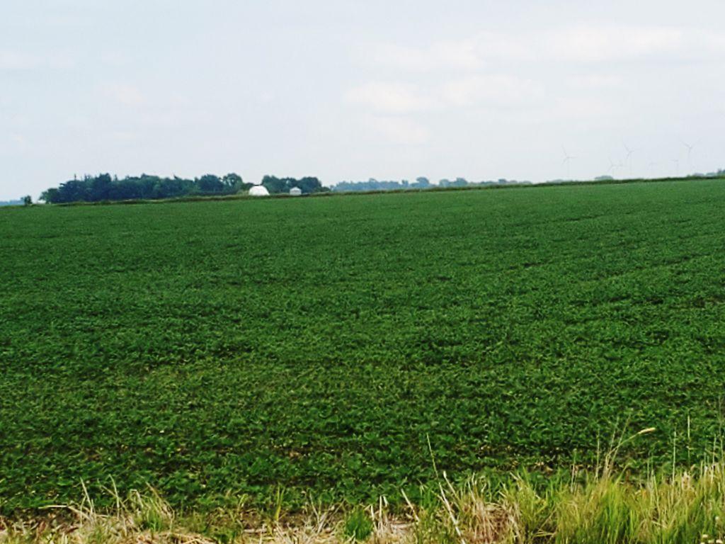 116.7+/- Acres Mower County, MN