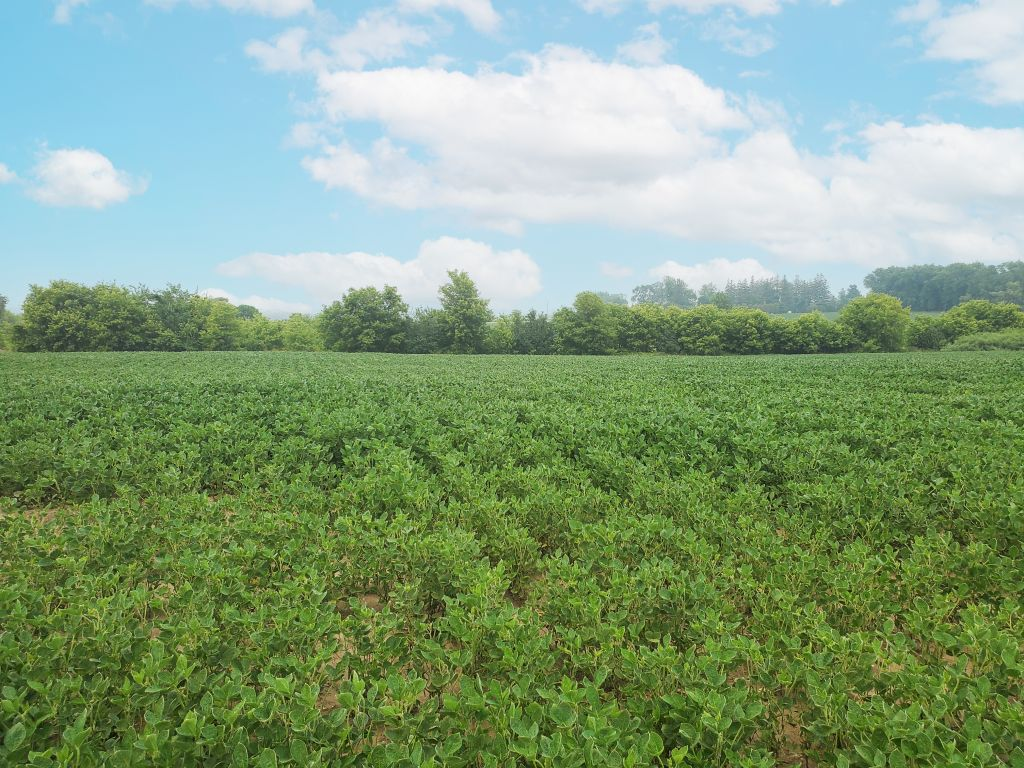 74.8+/- Acres Olmsted County, MN