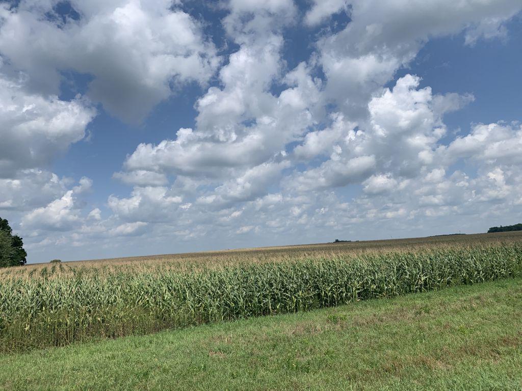 136.48+/- Acres Mower County, MN