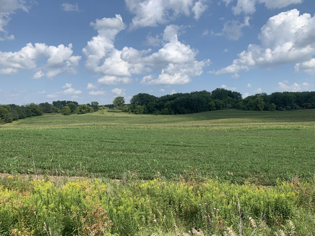 34.36+/- Acres Olmsted County, MN