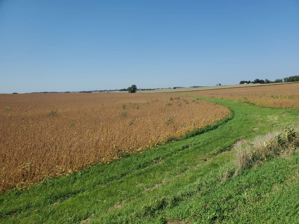 80+/- Acres Olmsted County, MN