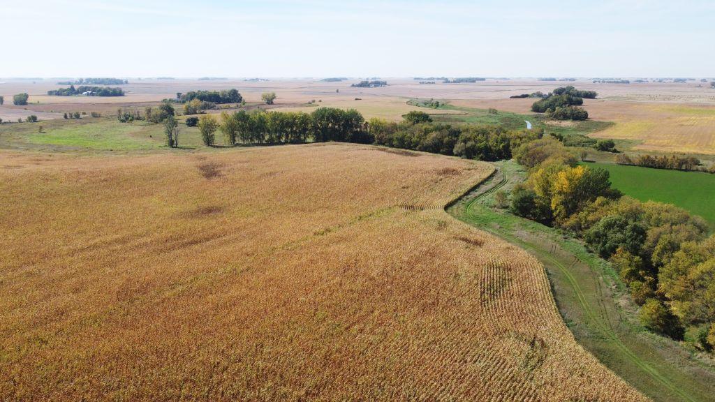 145+/- Acres Faribault County, MN - AUCTION