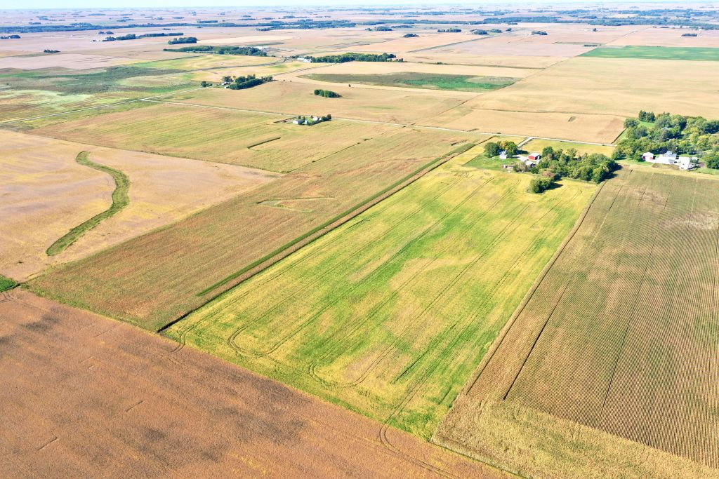 73.79+/- Acres Wright County, IA - AUCTION