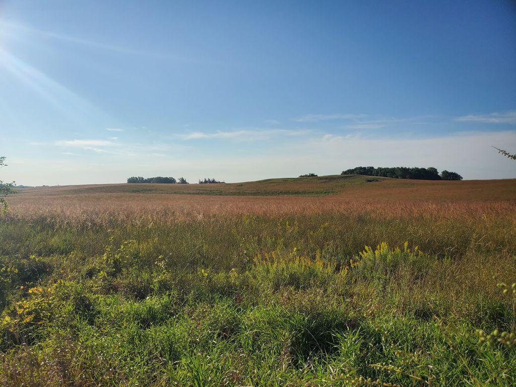 152+/- Acres Freeborn County, MN